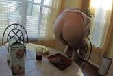 Scheisse zum Frühstück