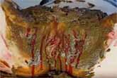 Blutige Muschi und Scat Dildo Spaß